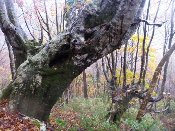 Thumbnail of post image 127